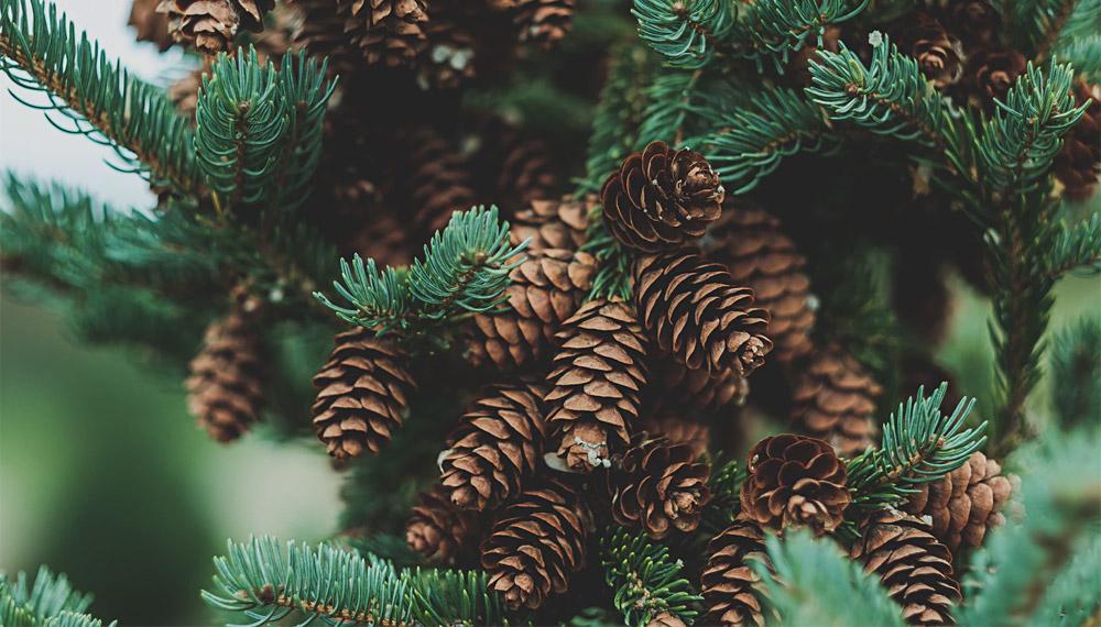 คำศัพท์ชื่อต้นไม้ ภาษาไทย-ภาษาอังกฤษ