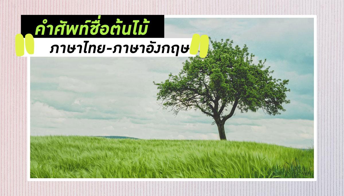 คำศัพท์ ต้นไม้ เรียนภาษาอังกฤษ