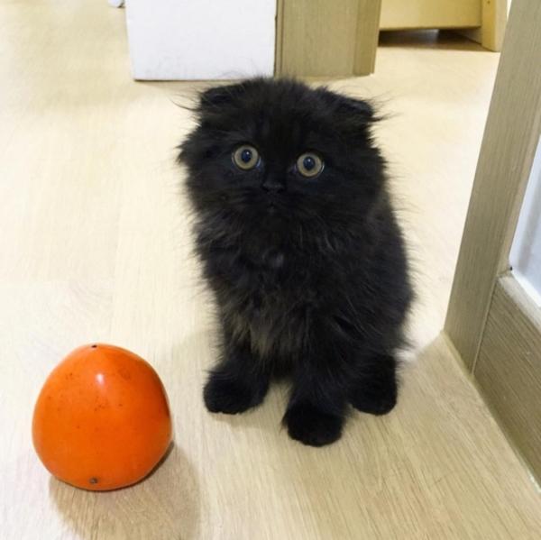 กีโม น้องแมวตัวดำ ตาโต น่ารัก เหมือนตุ๊กตามาก (5)