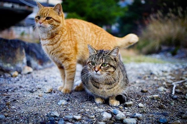cat-1096821_640