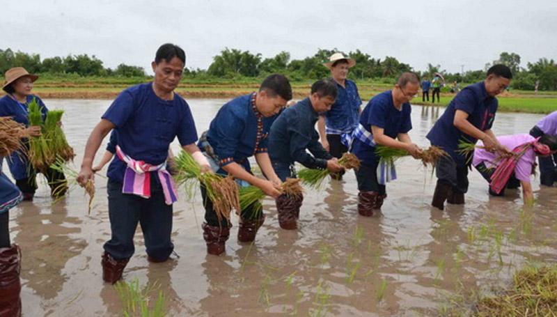 ชมรมเกษตรปลอดสารพิษ ไทยกรีน