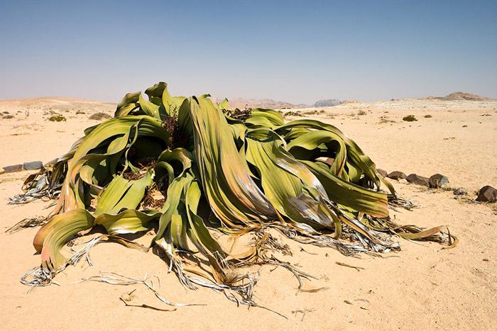 10.ปีศาจทะเลทราย