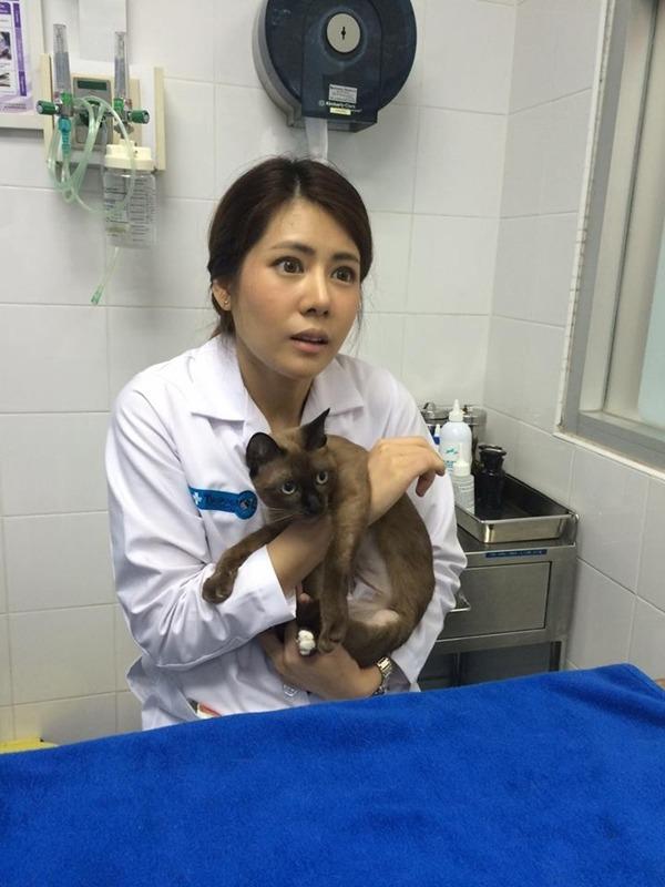 หมอแนน สัตวแพทย์คนสวย รพ.สัตว์ทองหล่อ แจ้งวัฒนะ #คุณหมอสวยบอกต่อ (2)
