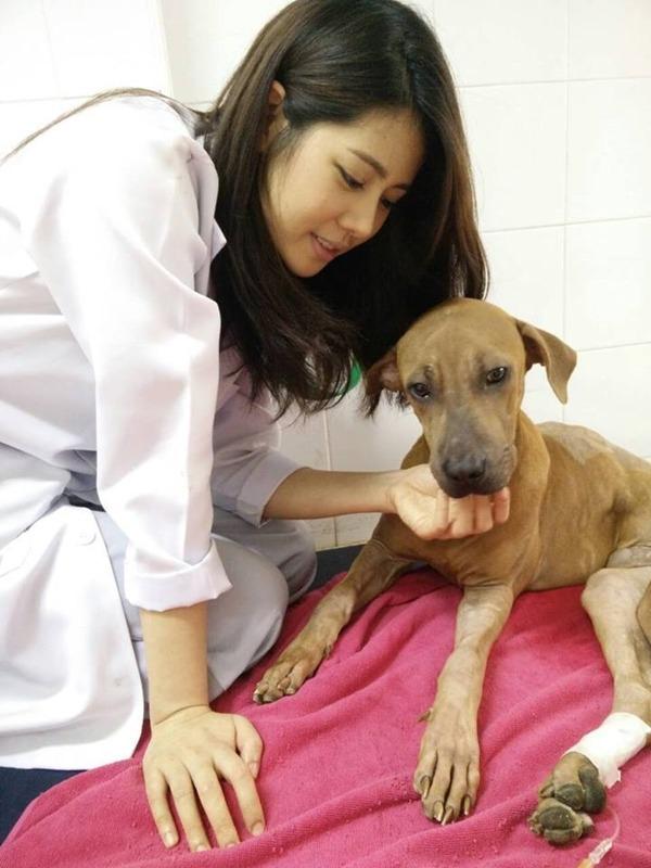 หมอแนน สัตวแพทย์คนสวย รพ.สัตว์ทองหล่อ แจ้งวัฒนะ #คุณหมอสวยบอกต่อ (5)