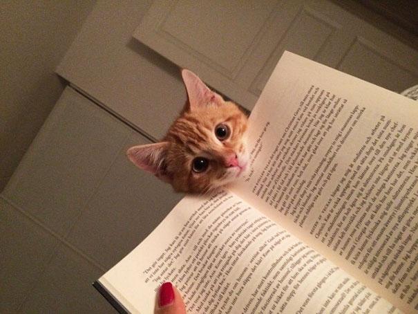 ทาสแมว สัตว์โลกน่ารัก อ่านหนังสือ แมว แมวเหมียว