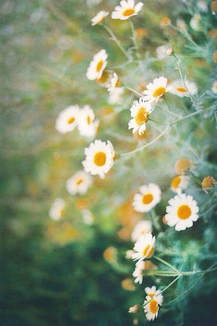 30 ภาพดอกไม้สวยๆ รูปภาพวอลเปเปอร์ สำหรับมือถือ