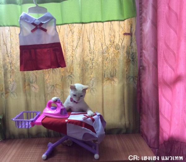 เจอแบบนี้รักตายเลย! เฮงเฮง และซาลาเปา แมวเทพสุดขยันช่วยทำงานบ้าน (1)