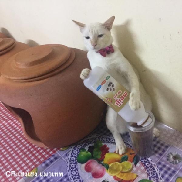 เจอแบบนี้รักตายเลย! เฮงเฮง และซาลาเปา แมวเทพสุดขยันช่วยทำงานบ้าน (10)