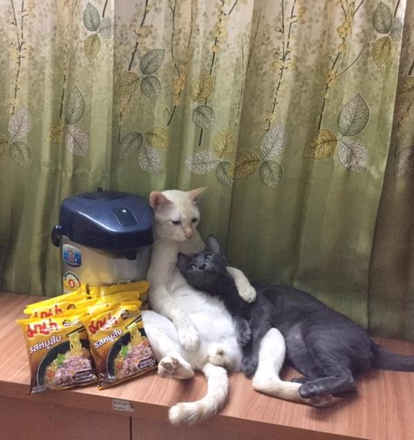 เจอแบบนี้รักตายเลย! เฮงเฮง และซาลาเปา แมวเทพสุดขยันช่วยทำงานบ้าน (11)