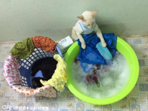 เจอแบบนี้รักตายเลย! เฮงเฮง และซาลาเปา แมวเทพสุดขยันช่วยทำงานบ้าน (12)