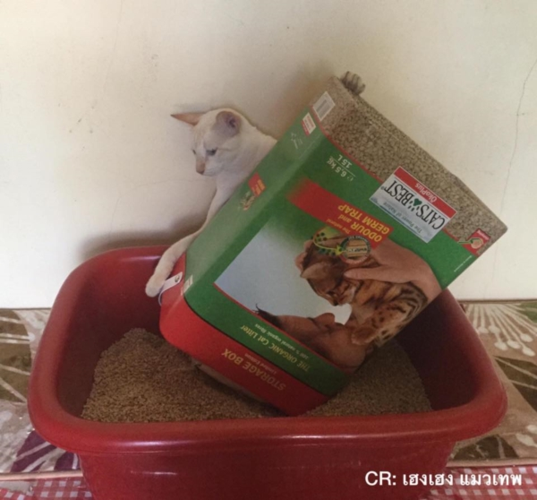 เจอแบบนี้รักตายเลย! เฮงเฮง และซาลาเปา แมวเทพสุดขยันช่วยทำงานบ้าน (15)