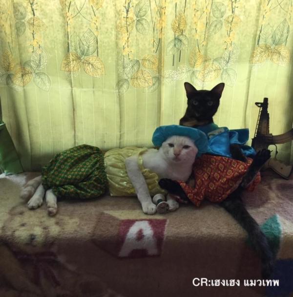 เจอแบบนี้รักตายเลย! เฮงเฮง และซาลาเปา แมวเทพสุดขยันช่วยทำงานบ้าน (19)