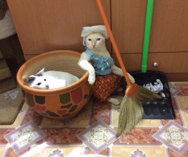 เจอแบบนี้รักตายเลย! เฮงเฮง และซาลาเปา แมวเทพสุดขยันช่วยทำงานบ้าน (2)