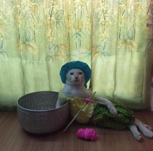 เจอแบบนี้รักตายเลย! เฮงเฮง และซาลาเปา แมวเทพสุดขยันช่วยทำงานบ้าน (3)