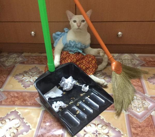 เจอแบบนี้รักตายเลย! เฮงเฮง และซาลาเปา แมวเทพสุดขยันช่วยทำงานบ้าน (5)
