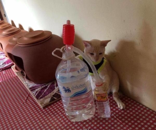 เจอแบบนี้รักตายเลย! เฮงเฮง และซาลาเปา แมวเทพสุดขยันช่วยทำงานบ้าน (9)