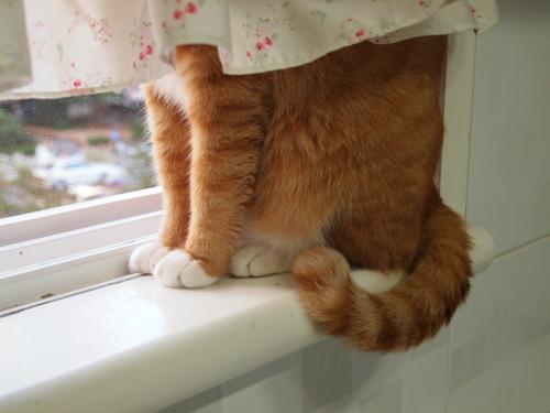 cat-hide