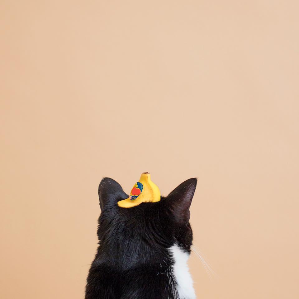 Princess Cheeto5