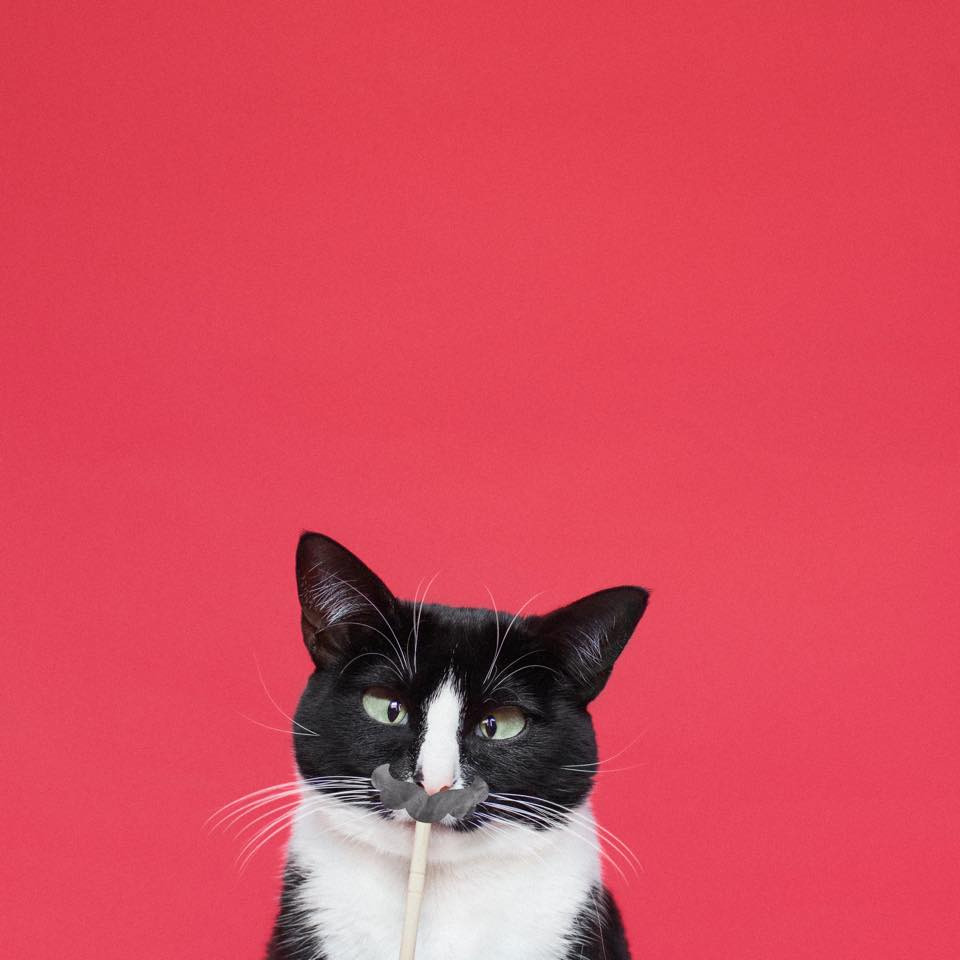 cat-PrincessCheeto02