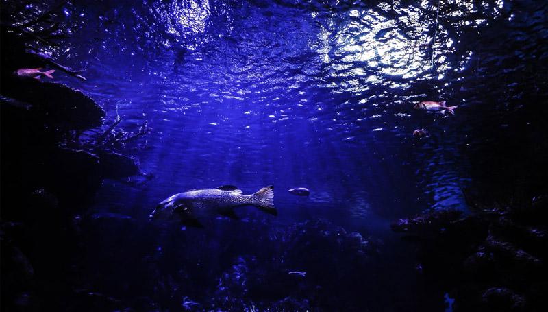 8 มิถุนายน วันทะเลโลก (World Oceans Day)