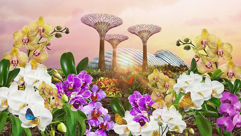 การจัดแสดงดอกไม้ 'Orchid Extravaganza'