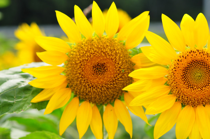 ภาพ:http://tromboneimai.blog.so-net.ne.jp/2010-08-21