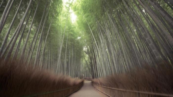 10.อุทธยานอาราชิยาม่า ญี่ปุ่น
