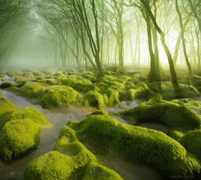 2.ป่าโบโลทิสที โรมาเนีย