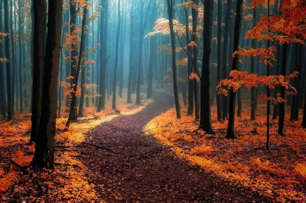 ป่าไม้ พิศวง