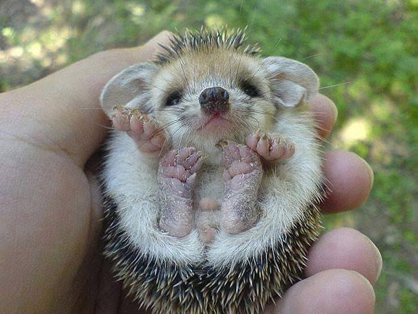 baby animals (14)