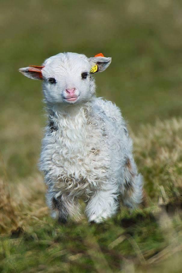 baby animals (15)