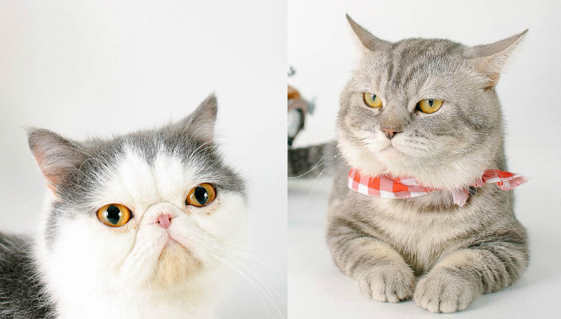จอนนี่ แมวศุภลักษณ์ ทาสแมว