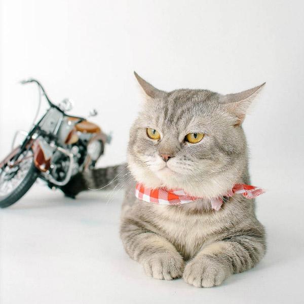 how-cat