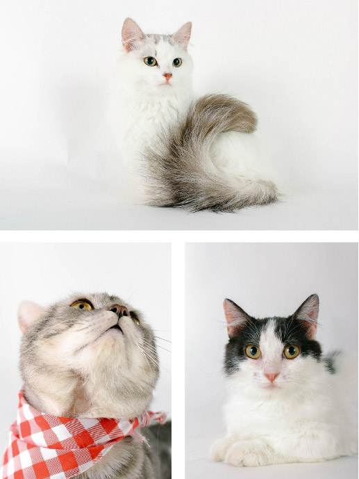 how-cat05