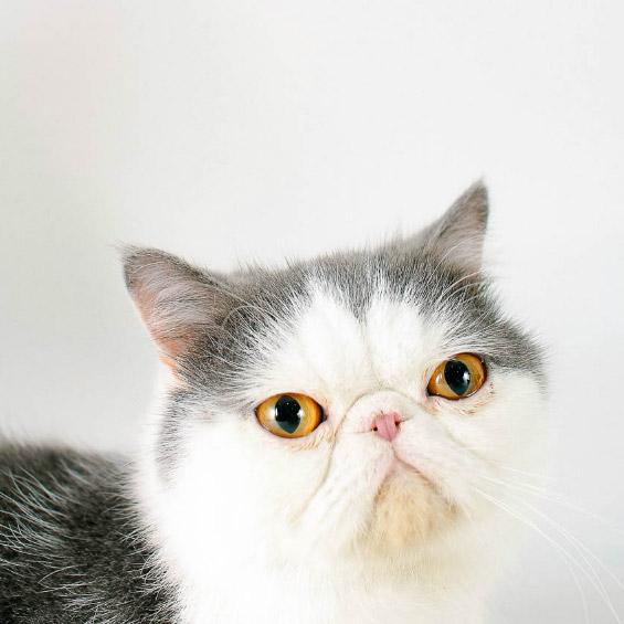 how-cat06