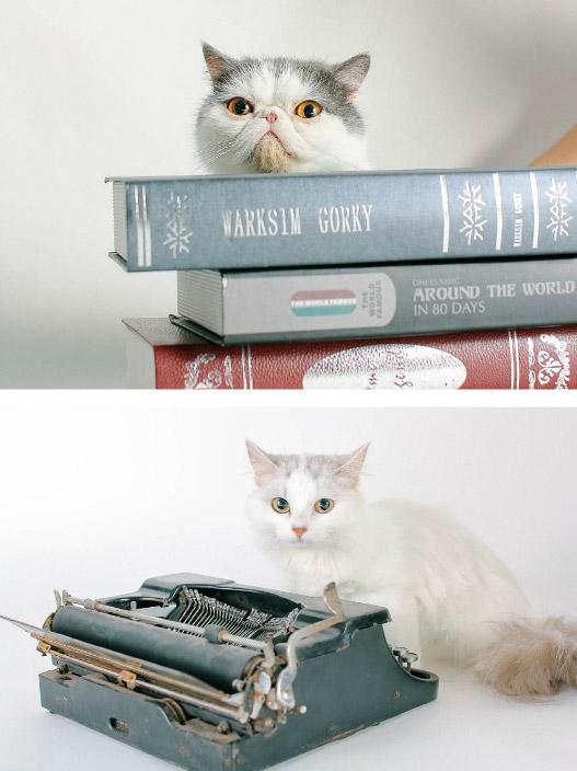 how-cat08