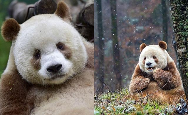 ประเทศจีน สัตว์โลกน่ารัก หมีแพนด้า