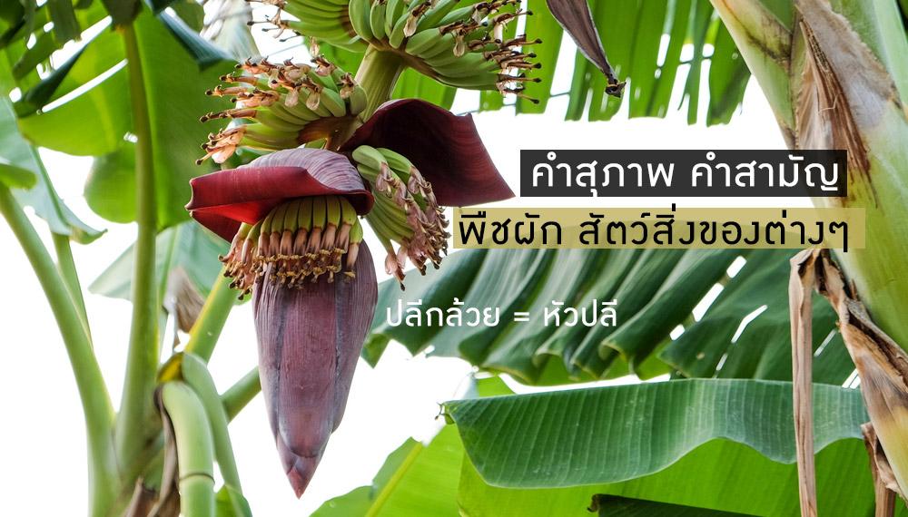 คำศัพท์ คำสามัญ คำสุภาพ ภาษาไทย