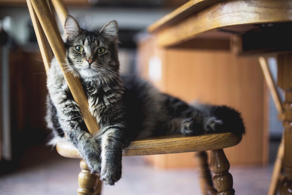 cat สัตว์โลกน่ารัก แมว