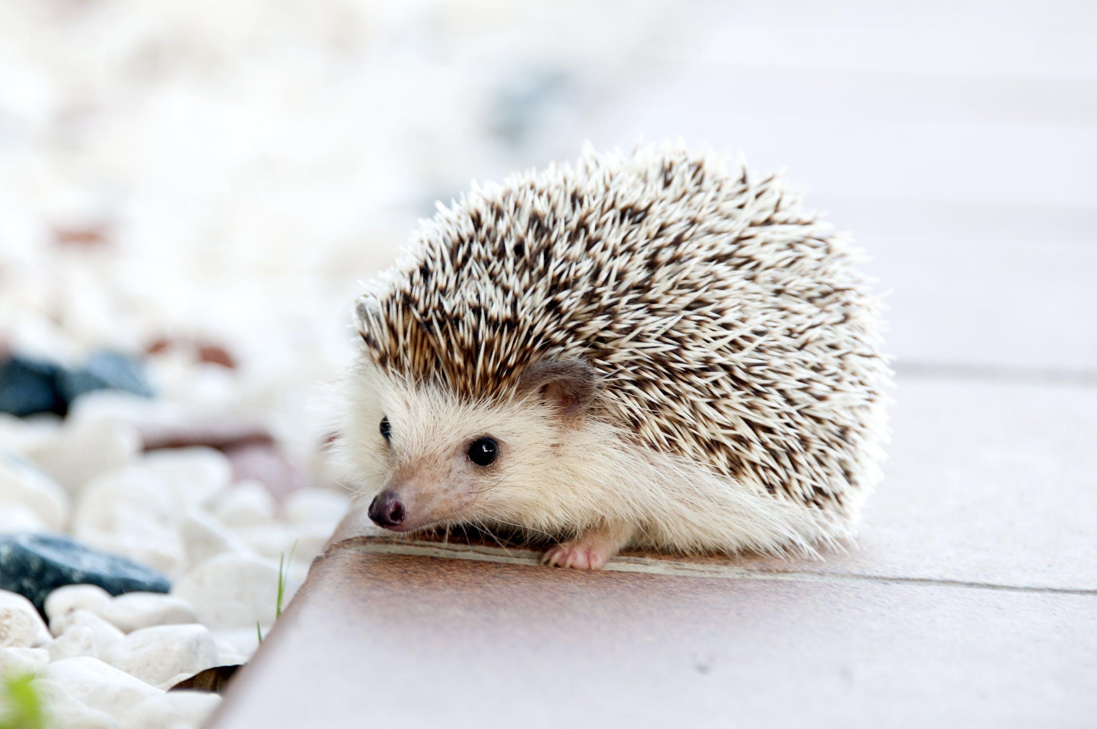 cute = น่ารัก