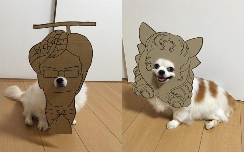 dog คอสเพลย์ ญี่ปุ่น สัตว์โลกน่ารัก สุนัข