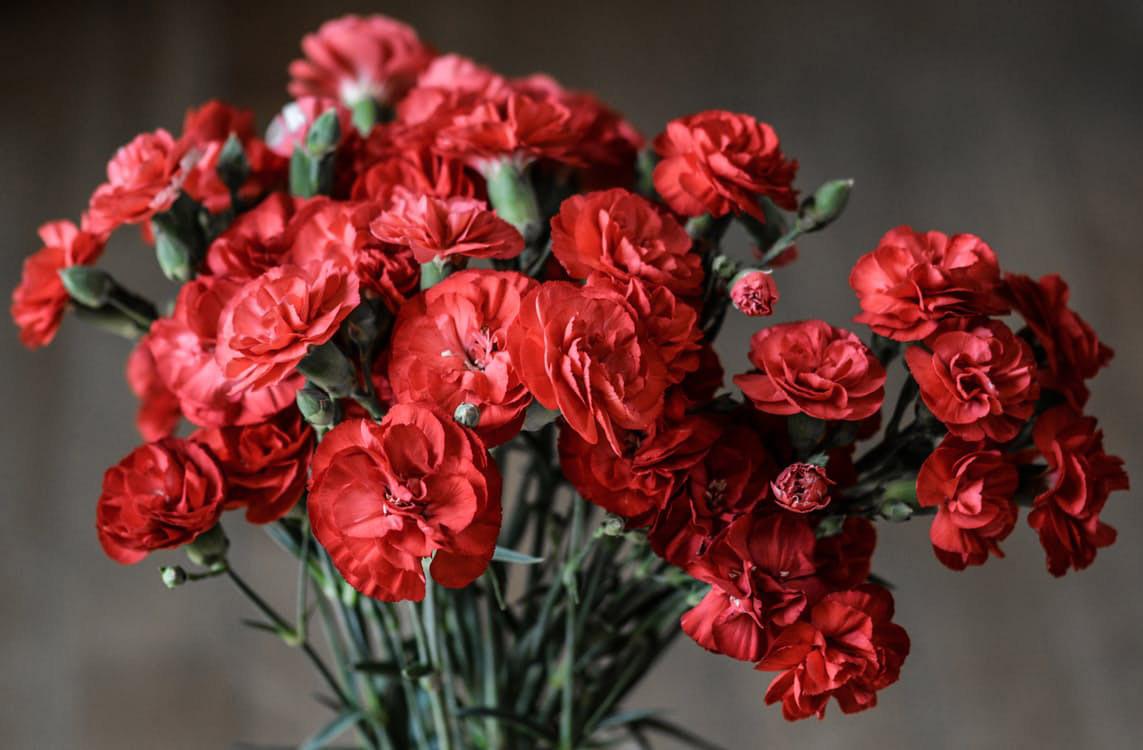 flowers-nice-01