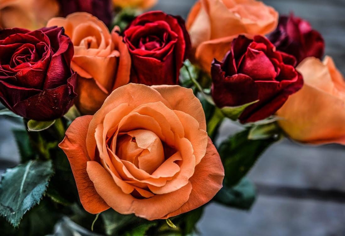 flowers-nice-04