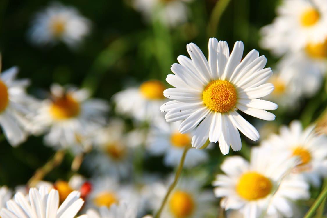 flowers-nice-06