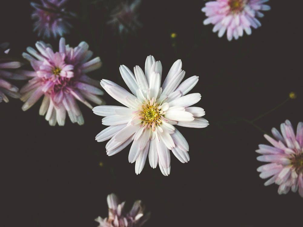 flowers-nice-08