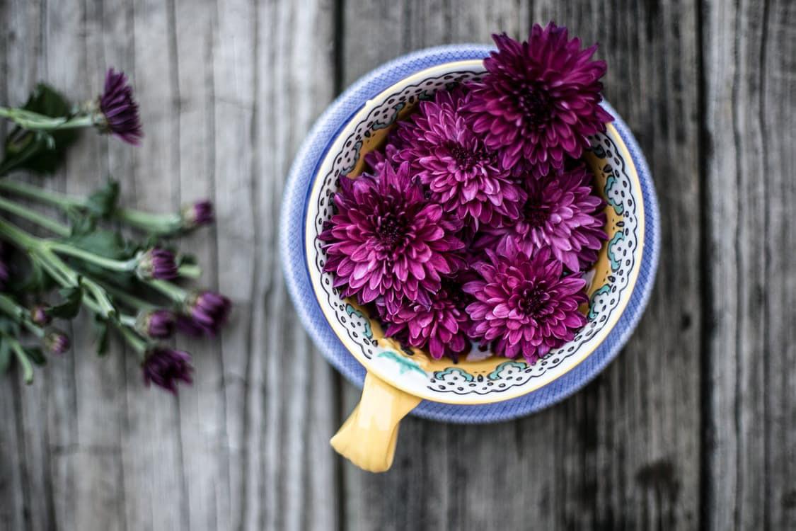 flowers-nice-09