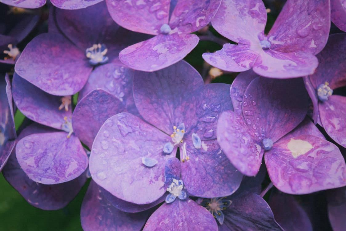 flowers-nice-11