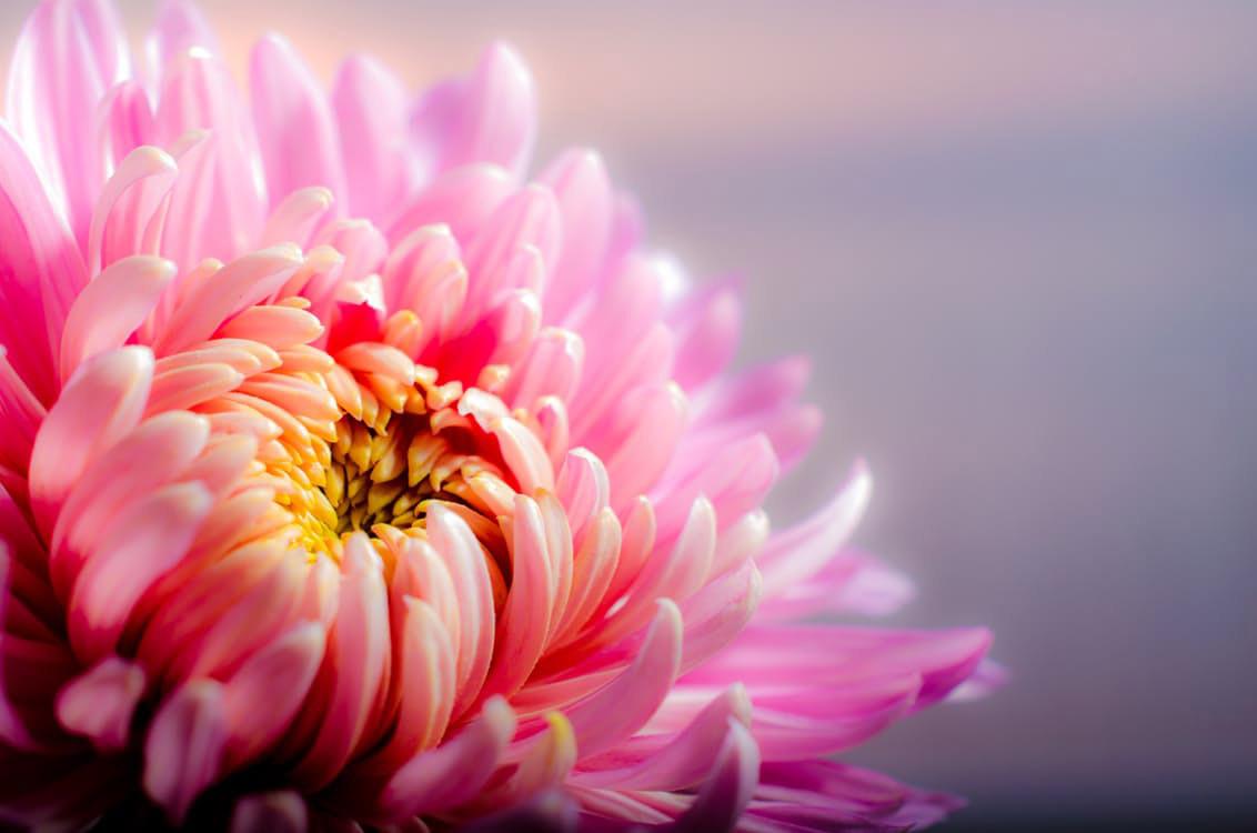 flowers-nice-12