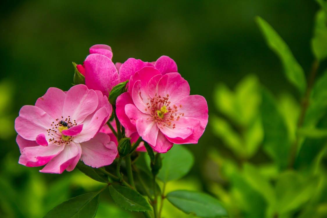flowers-nice-14