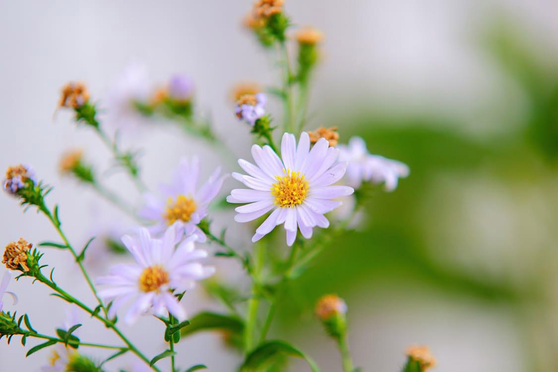 flowers-nice-15